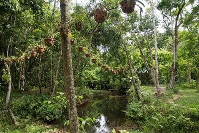 Botanical Garden – Dark Cave Tour